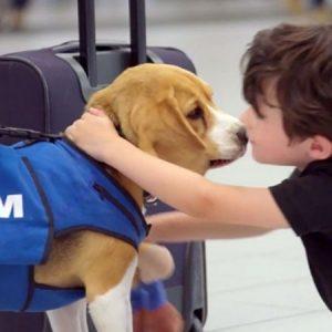 Возвращение потерянных вещей от авиакомпании KLM!
